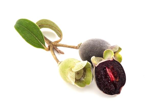 Flaummyrte oder rhodomyrtus tomentosa früchte isoliert auf weißem hintergrund.