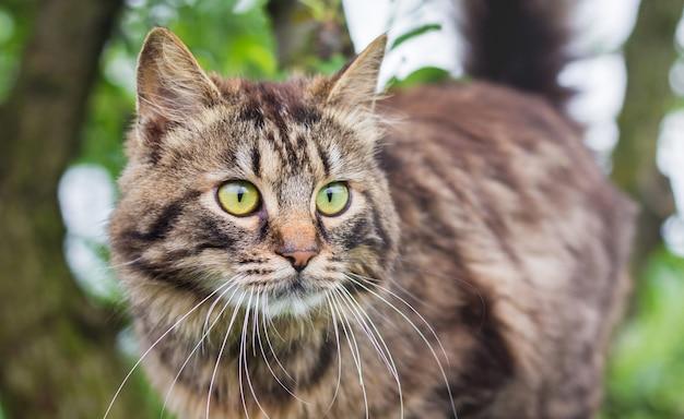 Flauschig gestreifte katze nahaufnahme auf einem baum. die katze klettert auf den baum