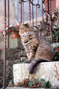 Flauschige getigerte katze, die auf der veranda sitzt