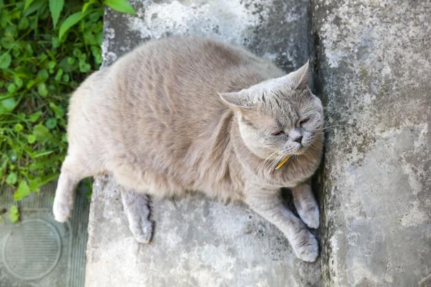 Flauschige graue katze im freien. nettes heimtier, das sommersonne genießt.