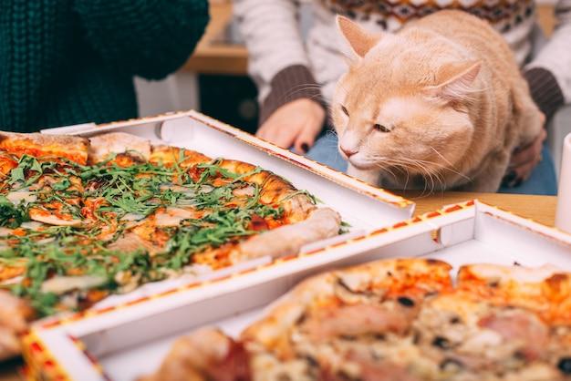 Flauschige große katze, die am tisch vor zwei pizza, fast-food-pizza-lieferung sitzt