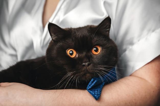 Flauschige katze liegend auf den beinen einer frau, nahaufnahme, getönt