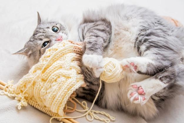 Flauschige süße graue katze spielt fröhlich mit knäuel aus garnkratzern mit hinterpfoten auf dem rücken liegend verhedderte fäden