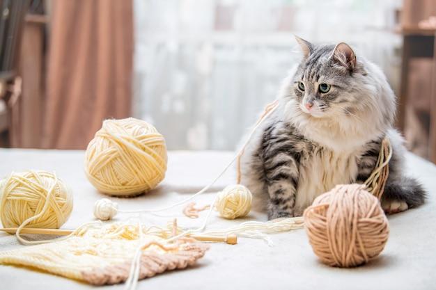 Flauschige süße graue katze spielt spaß mit knäueln aus verhedderten fäden, liegt zwischen den strängen