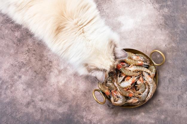 Flauschige weiße katze frisst garnelen. draufsicht, kopierraum.