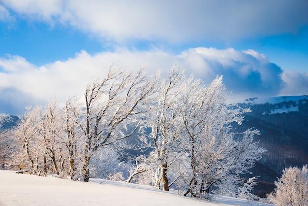 Flauschige wolken schützen unter weißem schnee, geschützt von wäldern und wunderschönen bergen