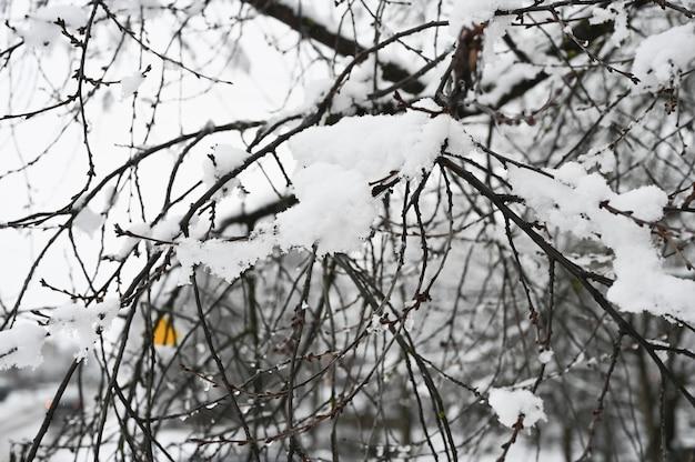 Flauschiger schnee liegt auf kahlen ästen.