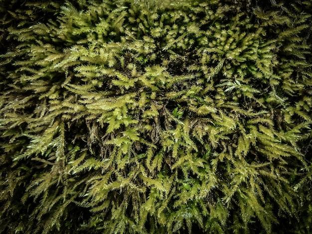 Flauschiger teppich aus grünem moos.