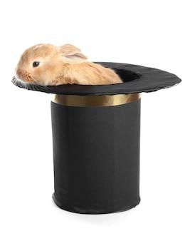Flauschiges foxy kaninchen im schwarzen zylinder isoliert auf weiß