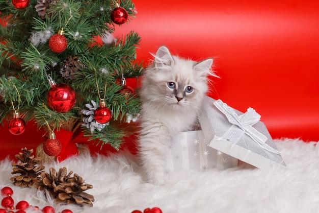 Flauschiges graues kätzchen auf rotem raum, weihnachtsbaum, neujahrsraum