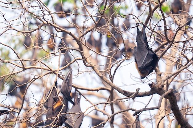 Fledermäuse hängen am baum