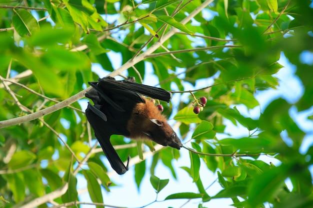Fledermaus auf baum