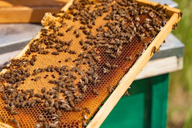 Fleißige bienen auf bienenwabe im bienenhaus