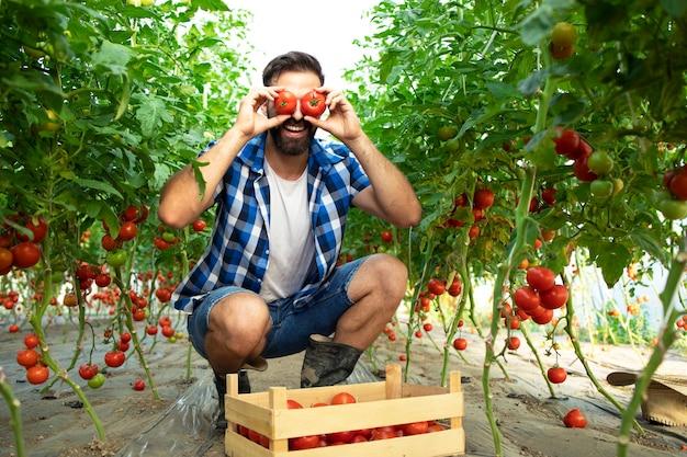 Fleißiger bauer, der dumme und lustige gesichter mit tomatengemüse im garten macht