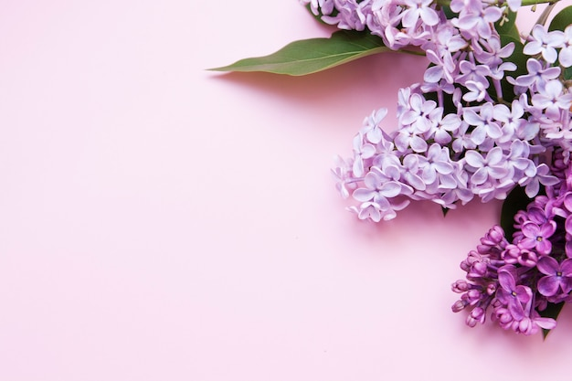 Fliederblumen auf einem rosa hintergrund flach liegen. draufsicht des frühlingsblumenlayouts