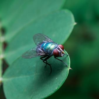 Fliege auf dem blatt