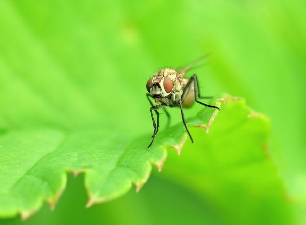 Fliege auf einem blatt