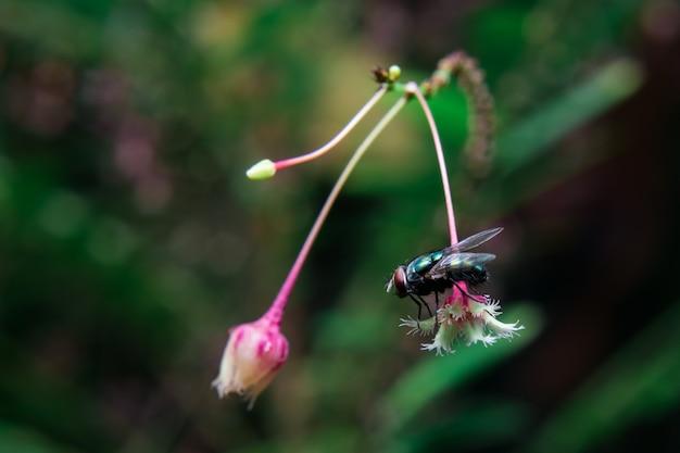 Fliege auf roter blume