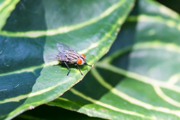 Fliege, die auf grünem blatt blackground hockt