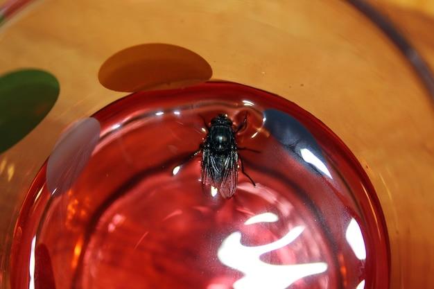 Fliege schwimmt in einem glas saft