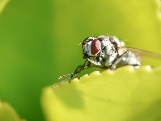Fliege thront auf dem blatt einer pflanze in einem garten