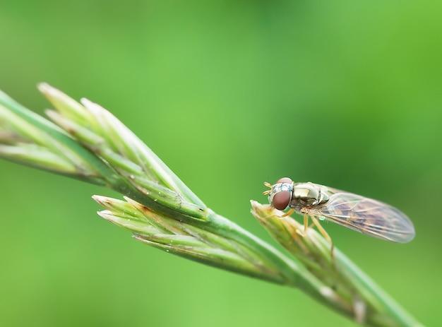 Fliegen sie mit verschwommener grüner natur
