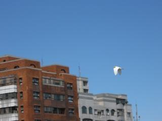 Fliegen über dächer