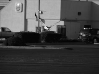 Fliegen über den parkplatz