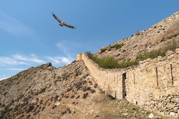 Fliegende adler über der alten festungsmauer. die festung gunib ist ein historisches denkmal von dagestan. russland.