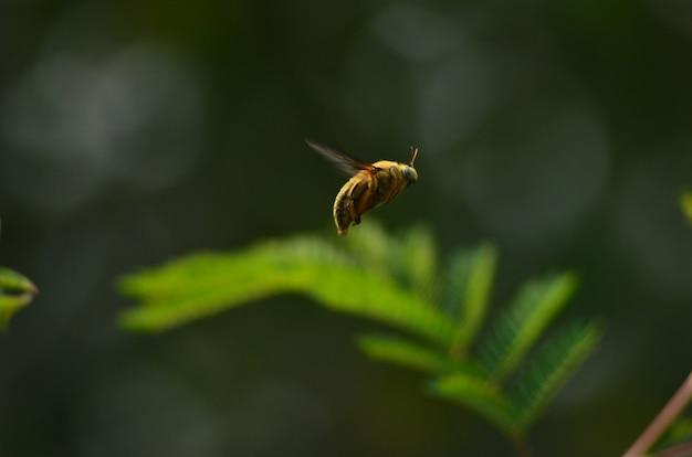 Fliegende gelbe biene auf grün