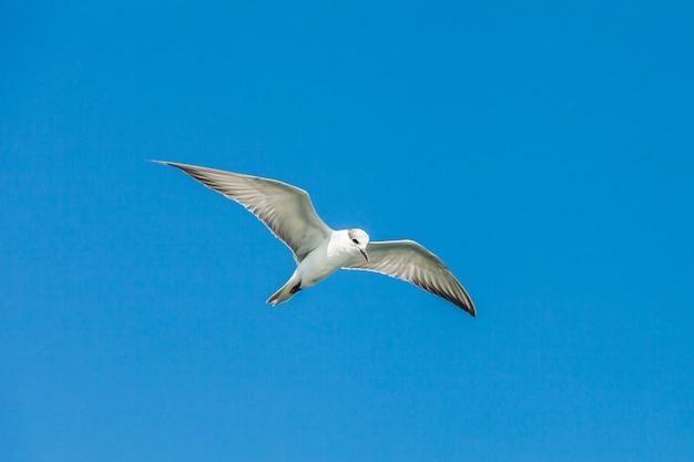 Fliegende möwen am blauen himmel