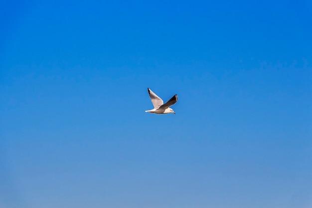 Fliegende möwen im blauen himmel an einem sonnigen tag,