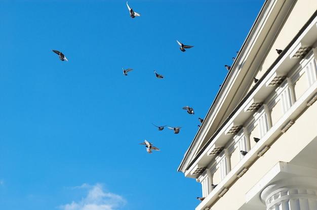Fliegende tauben