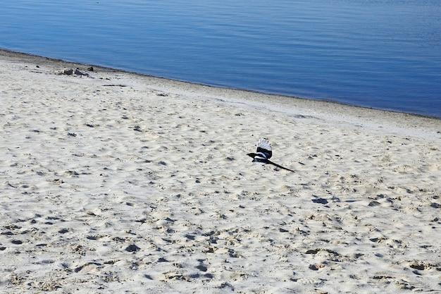 Fliegender elster über der sandseeküste.