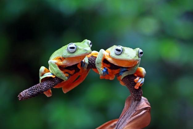 Fliegender frosch im zweig