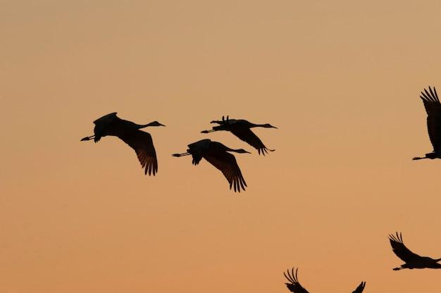 Fliegender kran silhouetten