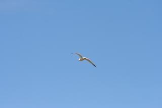Fliegender vogel, himmel