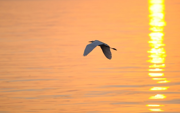 Fliegender vogel über meer