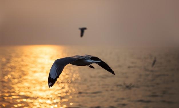 Fliegenvogelmeerblick in der sonnenuntergangzeit