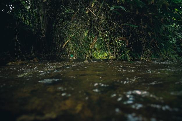 Fließender fluss mit grünen pflanzen