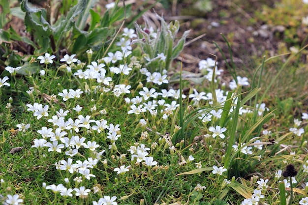 Flora am hang des mount elbrus im nordkaukasus in russland.