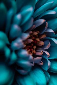 Flora-branding und liebeskonzept blaue gänseblümchenblütenblätter in voller blüte abstrakte blumenblüten-kunsthintergrundblumen im frühling natur für parfümdufthochzeit luxus-schönheitsmarke urlaubsdesign holiday