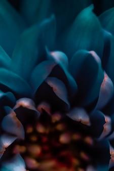Flora-branding und liebeskonzept blaue gänseblümchenblütenblätter in voller blüte abstrakter blumenblüten-kunsth...