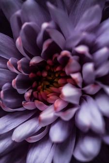 Flora branding und liebeskonzept lila gänseblümchenblütenblätter in voller blüte abstrakte blumenblütenkunst hintergrund blumen im frühling natur für parfümduft hochzeit luxus schönheit marke urlaubsdesign