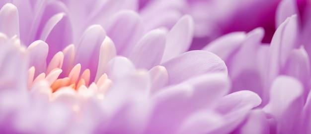 Flora branding und liebeskonzept lila gänseblümchenblütenblätter in voller blüte abstrakte blumenblütenkunst ...