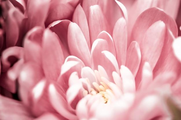 Flora-branding und liebeskonzept rosa gänseblümchenblütenblätter in voller blüte abstrakter blumenblüten-kunsth...