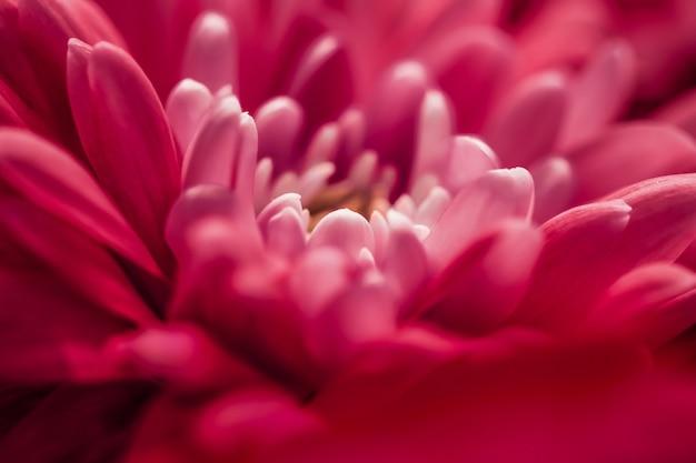 Flora-branding und liebeskonzept rote gänseblümchenblütenblätter in voller blüte abstrakte blumenblüten-kunsthintergrundblumen im frühling natur für parfümduft-hochzeit luxus-schönheitsmarke urlaubsdesign
