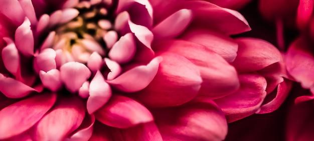 Flora branding und liebeskonzept rote gänseblümchenblütenblätter in voller blüte