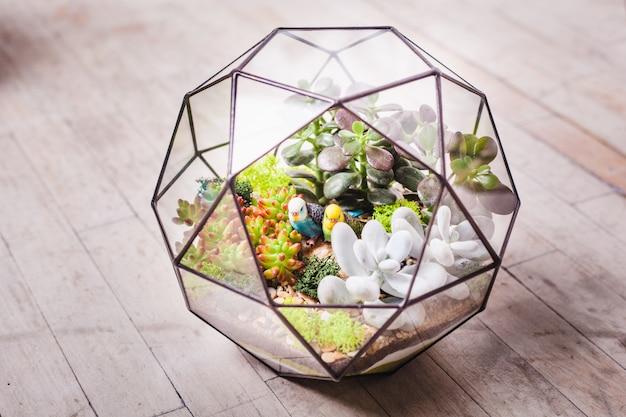 Florarium - komposition aus sukkulenten, stein, sand und glas, interieurelement