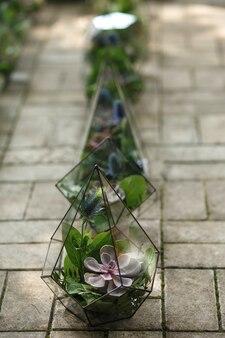 Florarium mit frischen saftigen blumen